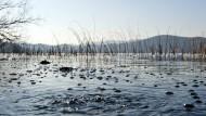 Kohlendioxid-Blasen  am Laacher See in der  Eifel.