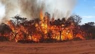 Waldbrand im Naturpark Chapada dos Guimaraes im brasilianischen Amazonasgebiet.