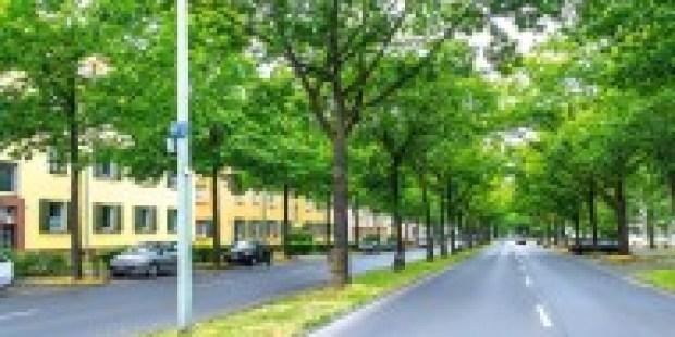 """100 Jahre Joseph Beuys: Wie Kassel """"7000 Eichen"""" bekam"""