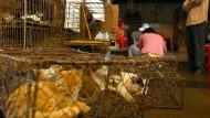 Tiermärkte in China: Kampf den Katzenjägern