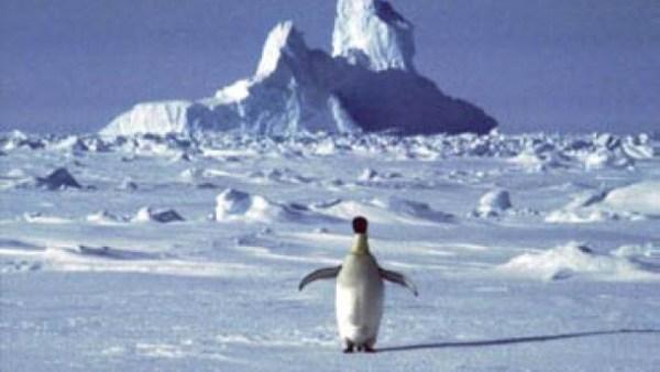 Antarktis: Leben trotz Kälte, Salz und Dunkelheit ...