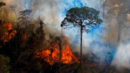 Fire in the Amazon rainforest (Image from August 15, 2020)