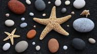 16 Elliptische Kiesel aus Kalzit, Basalt, Sandstein und Backstein samt Seegetier auf dem schwarzem Sandstrand von Lanzarote.