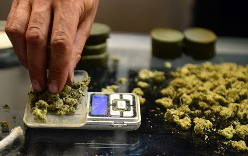 A vendor weighs buds for medical marijuana patients at Los Angeles's first-ever cannabis farmers market on July 4.