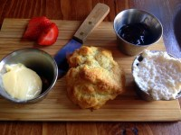 The scone at the Peckish Pig, still warm, served with butter, jam, and clotted cream.