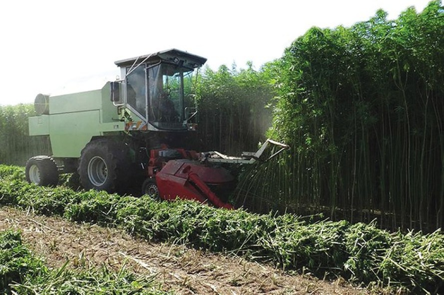 Oklahoma's industrial hemp market is projected to be a billion-dollar industry within its first five years of operation. - PROVIDED