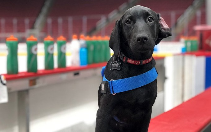 Luna would often visit the Coyotes' offices a few times a week, stopping in at the locker room and getting to go on the ice sometimes, too. - ARIZONA COYOTES