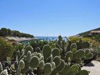 kaktusići