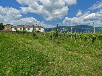 Majerija i vinogradi