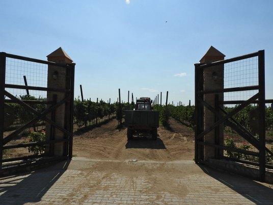 vinogradi ispod kojih je vinarija