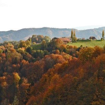 zoom na jesen