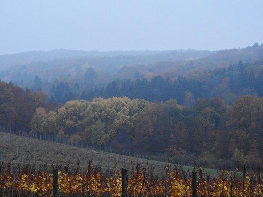 Marof vinarija