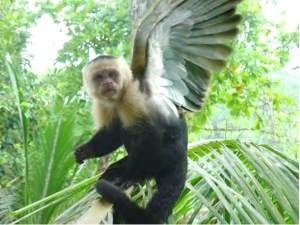 flying_monkey_by_macropete