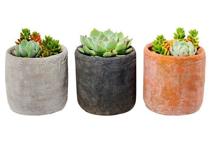 For the Plant Lover: Succulent Arrangement Trio Kit