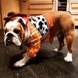 Chrissy Teigen Dressed Her Canine as Woody From Toy Story, and Luna Loves Her Little Sheriff