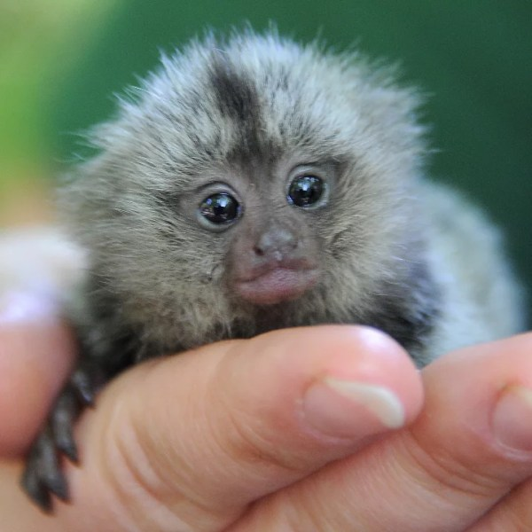 Pictures of Fall's Baby Zoo Animals | POPSUGAR Pets