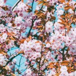 Cherry Blossom Iphone Wallpaper The Best Ios 14 Wallpaper Ideas That Ll Make Your Phone Look Aesthetically Pleasing Af Popsugar Tech Photo 8