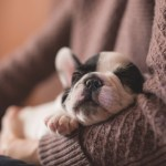 Having A Puppy Is Not Like Having A Baby Popsugar Family