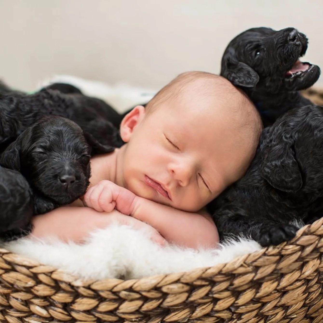 Newborn Baby And Puppies Photo Shoot Popsugar Family