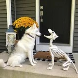 Pets Aren't Sure How to Feel About Target's Animal Skeletons, and It's Actually Pretty Cute
