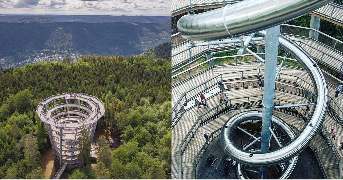 Image Result For Baumwipfelpfad Slide