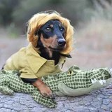 21 Lovable Dachshunds in Inventive Halloween Costumes - From the Tin Man to a Mummy