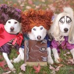 Labrador And Husky Dogs Dressed As Hocus Pocus Witches Popsugar Pets