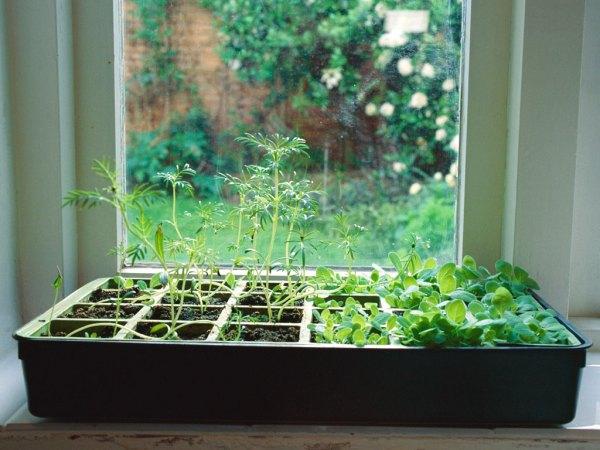 indoor herb garden How to Grow an Indoor Herb Garden - TODAY.com