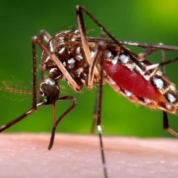 http://www.nbcnews.com/storyline/zika-virus-outbreak/new-dengue-vaccine-may-form-basis-zika-vaccine-n540851