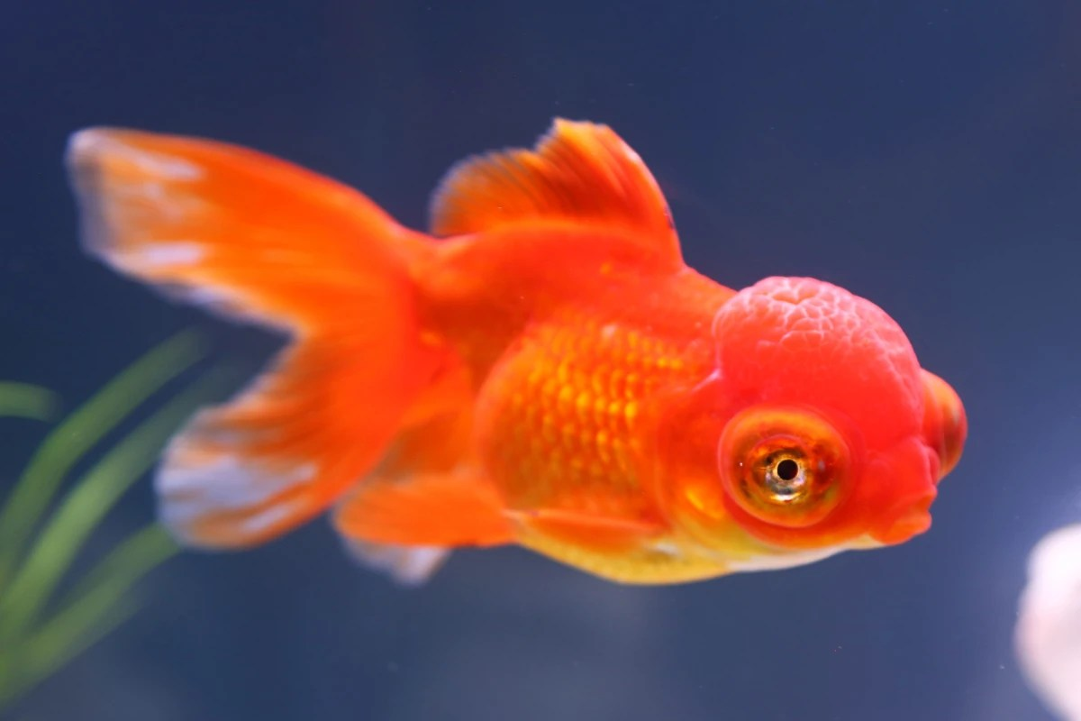 Fish Can Recognize Your Face Really