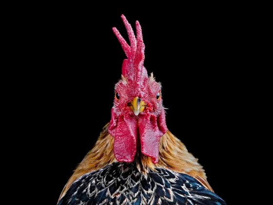 Malaysian chicken