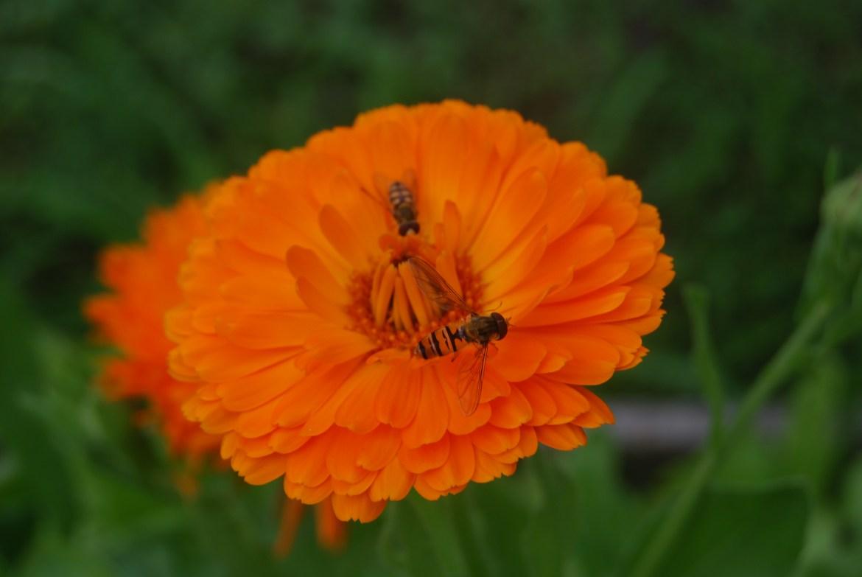 Blommor_0006