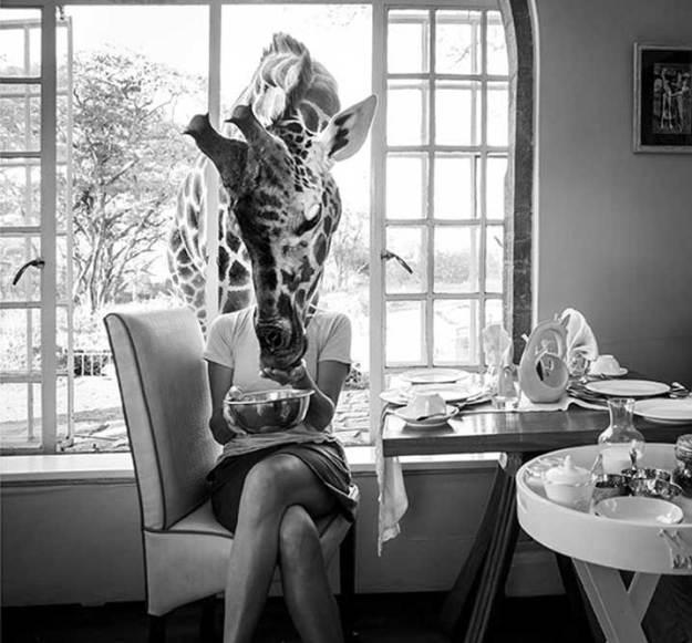 Frukost med giraffer - vilken dröm!