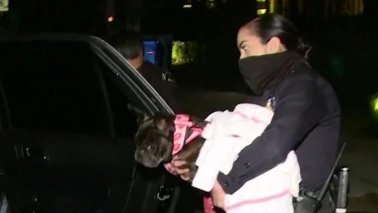 Lady Gaga's dog walker shot, French bulldogs stolen in Hollywood 2/21/25