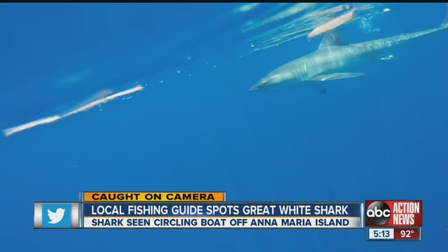 maria island requin