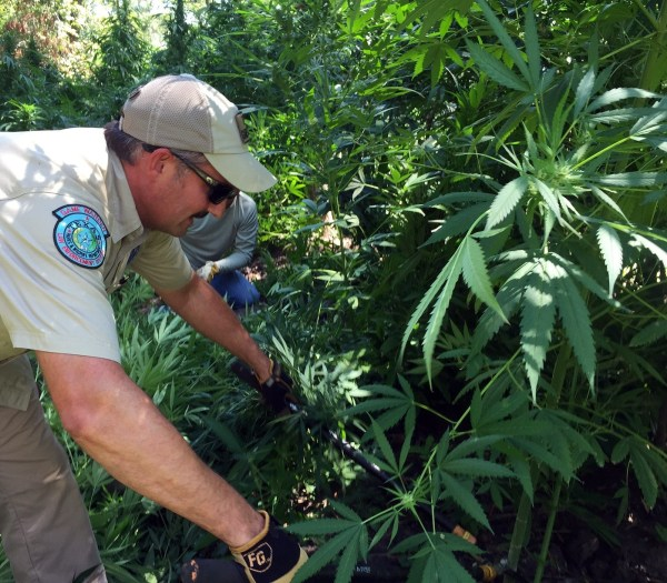 Texas Game Wardens Destroy $6 Million Worth Of Marijuana ...