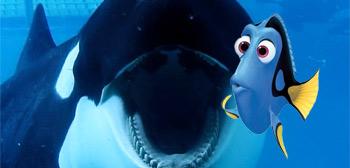 Blackfish / Dory