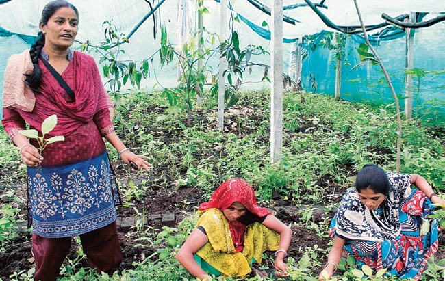 The women who create the vermicompost also use the organic manure in their own fields.