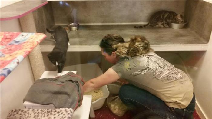 Tufft att vara volontär på katthemmet