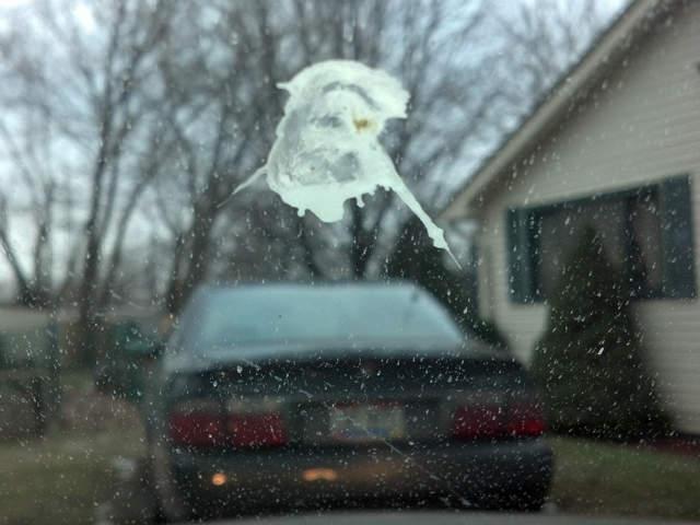 bird poop jesus
