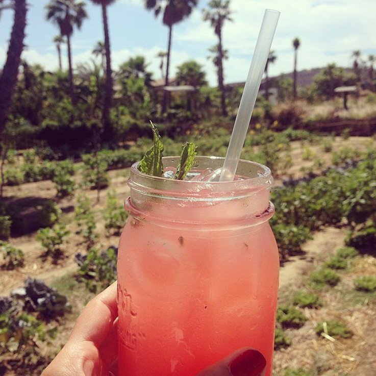 Lauren Conrad sipped on a fresh cocktail.  Source: Instagram user laurenconrad