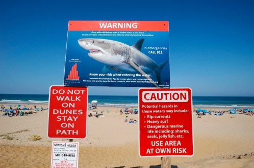 More than 150 great white shark sightings logged off Cape Cod ...