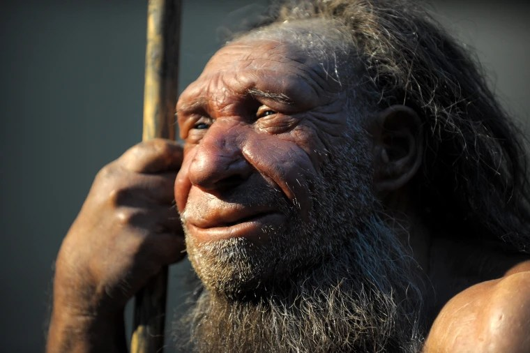 Neanderthals And Humans May Have Had For Millennia Study
