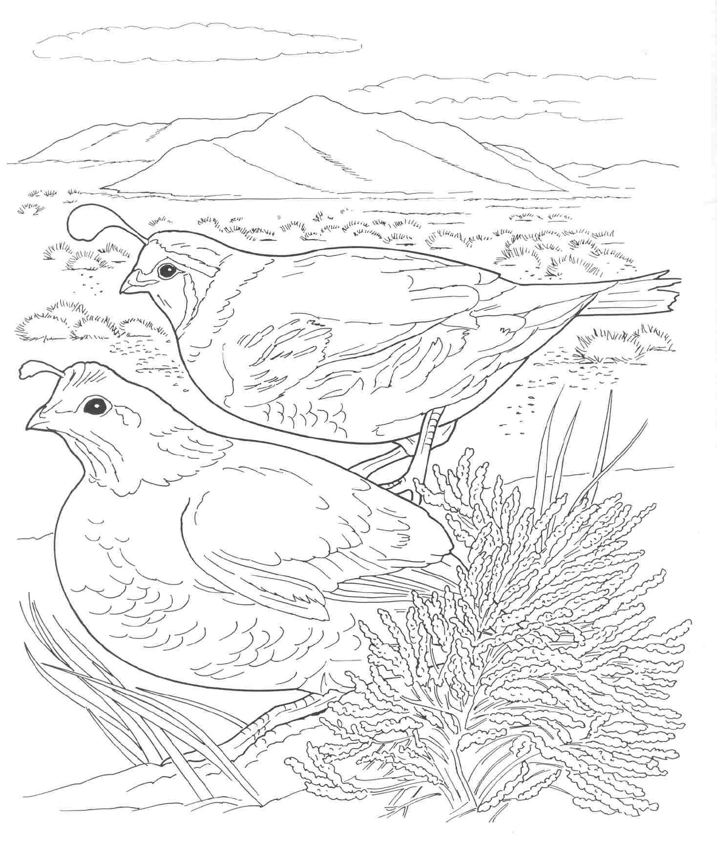 California Regions Coloring Page Coloring Pages