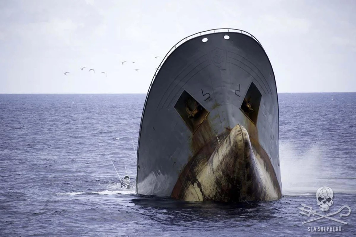 Conservation Group Rescues Crew Of Sinking Ship It Had