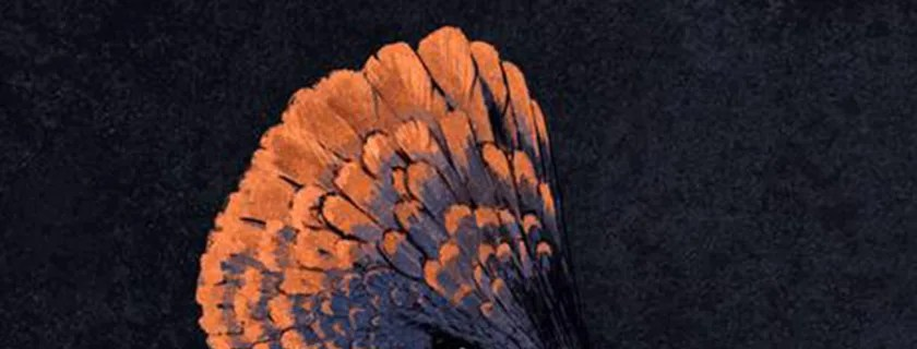 Dino-Chicken! Scientists Create Chicken Embryos with Dinosaur Snouts