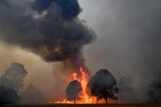 Image: Smoke and flames rise from burning trees near the town of Nowra in New South Wales on Dec. 31, 2019.