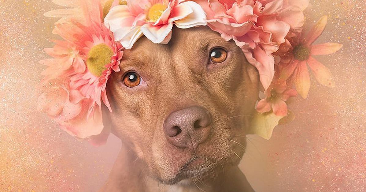 Pit Bulls In Flower Crowns POPSUGAR Beauty