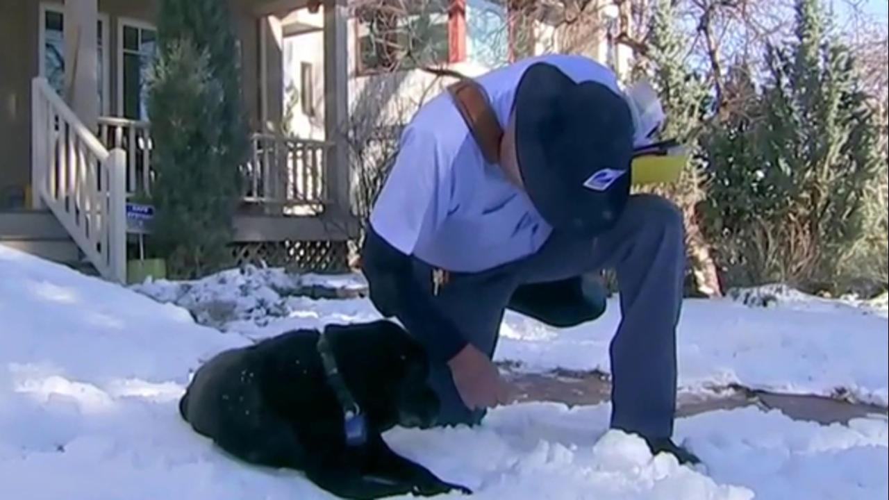 Mailman Builds Ramp For Aging Dog After Forging Special