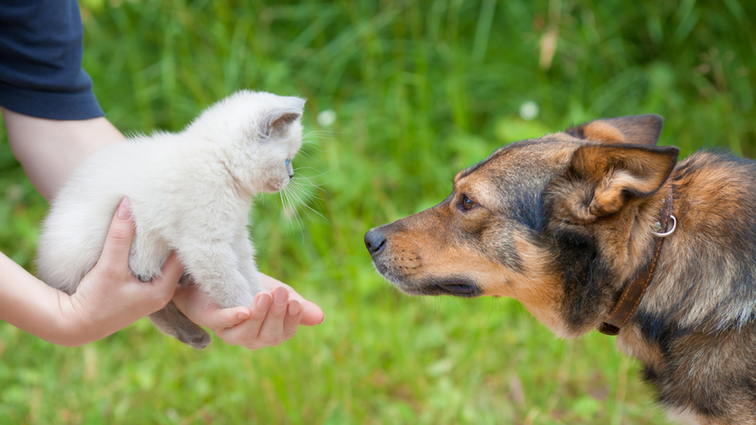 Do Dogs Or Cats Love Their Owners More Study Says One Pet